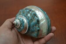 """PEARL GREEN MOTHER OF PEARL BANDED TURBO SEA SHELL HERMIT CRAB 3 1/2"""" - 4"""" #7131"""