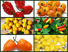 """""""HOT FOR HOTTER PEPPERS"""" HEIRLOOM PEPPER SEEDS - 6 PACK SPECIAL -  SPICE IT UP!"""