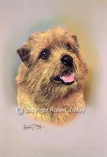 Norfolk Terrier Print by Robert J. May