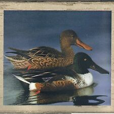 Ducks in Realistic Pond Scenes  - ONLY $6 - Wallpaper Border A086