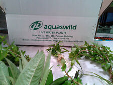 Live aquarium plants -10 varieties of aquatic plants for setting an aquarium