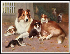 ROUGH COLLIE ITH PUPS AND A KITTEN CHARMING VINTAGE STYLE DOG PRINT POSTER