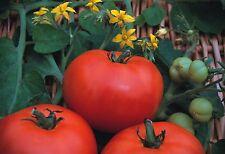 Vegetable - Tomato -  Beefmaster F1 - 200 Seeds