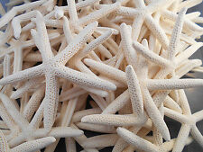 "12 White Pencil (Finger) Starfish 3-4""  Beach Wedding Nautical Decor A1 Quality"