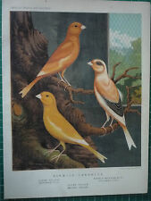 """CASSELLS CANARIES.  """" NORWICH CANARIES  """" 1879. VERY RARE"""