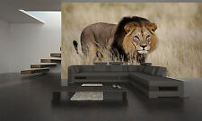 Staring Male Lion Wall Mural Wallpaper GIANT WALL DECOR PAPER POSTER
