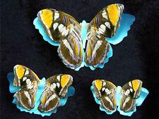 Printed, Die Cut Paper Butterflies Californian Sister Design