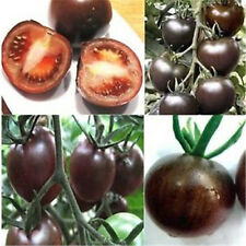 FD856 Rare Seed Tomato Black Cherry Vegetable Seed Tasty Russian Heirloom 20PC A