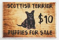 Scottish Terrier Puppies For Sale FRIDGE MAGNET (2.5 x 3.5 inches) sign scottie