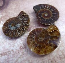 Split Ammonite Fossil Beads Amonite Beads Pack of 2
