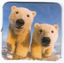 Frigorifero magnete -: due piccoli orsi polari-two little Polar Bears