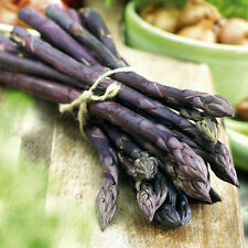 Asparagus Seeds - PURPLE PASSION - Perennial Vegetable - Heirloom - 20 Seeds