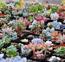 100PCS Mixed Succulents Seeds Rare Succulent Potted Plant Home Garden Decor