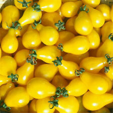 FD1425 Yellow Tomato Seed vegetable Fruit Seed Healthy Green Food  30 Seed A