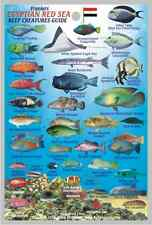 "Franko Egypt Red Sea Reef Creatures Guide Laminated Fish ID Card 4"" x 6"""