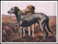 IRISH WOLFHOUND TWO DOGS IN MOORLAND SCENE LOVELY DOG PRINT POSTER