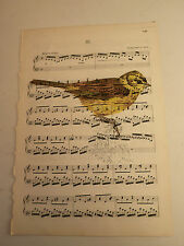 Vintage music sheet printed bird picture, wall art, antique, Yellowhammer