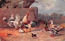"""Chicken Ducks Farm Life Birds, The """"Alpha"""" M. Srhonian Munchen"""