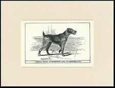 Airedale Terrier Rare Antique 1900 Wood Block Engraving Dog Print Ready Mounted