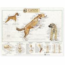 CANINE SKELETAL ANATOMY, LAMINATED DOG CHART, 20 X 26