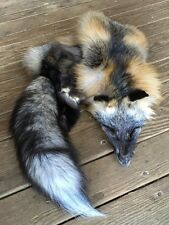 WILD CROSS FOX Tanned Pelt Skin Taxidermy fur craft Log Cabin Decor coyote deer