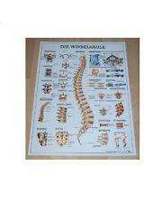 NEU Anatomie Lehrtafel / Lehr Poster Wirbelsäule