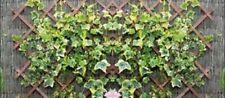 Enrejado de madera 3 2ft X 6ft expansión jardín planta trepadora panel de valla de enrejado