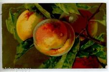 Still Life Fruit Peaches Velvet Paper Natura morta Pesche PC ITALY circa 1930