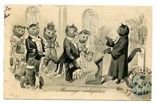 vintage cat postcard dressed cats wedding marriage altar priest bride groom 1905