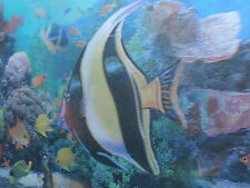ICON! Tropical Fish! 3D Picture! Poster! Lenticular! Animals! 2 pictures in 1!