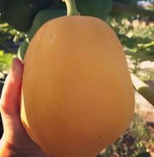Big - Orange Papaya - Hybrid - Fruit Seeds - Pack Of 50 Seeds