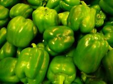 55 Seeds of HEIRLOOM NON GMO ORGANIC Green Bell Peppers - FREE SHIPPING