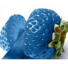 FD792 Blue Strawberry Seeds Nutritious Delicious Fruits Strawberries Seed ~50PC/