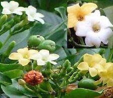 Parfümbaum Mitbringsel Mitgebsel kleine Geschencke für die Männer Frauen Kinder