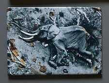 Peter Beard Fridge Photo Magnet 9x7cm Elephant Starvo National Park 1972 Elefant