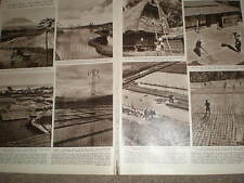 Photo article steps in the cultivation of rice Bali and Japan 1956 ref Z