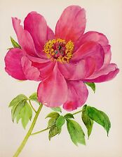 PEONY Botanical Print Romantic Pink Flower Gallery Wall Shabby Chic Shrub 2035