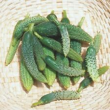 Cucumber Seeds- Paris Pickling Heirloom- Gherkin- 50+ seeds   2016 Seeds