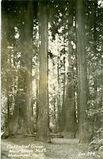 Muir Woods National Monument, CA RPPC of the Beautiful Cathedral Grove and light