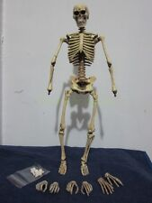 """1/6 Scale Bones Skeleton 16 joints & movable mouth 12"""" Action Figure"""