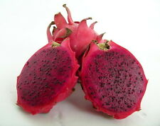 "American Beauty Dragon Fruit - Hylocereus - Pitaya/Strawberry Pear - 4"" Pot"