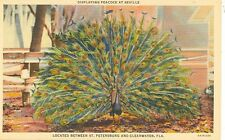 CLEARWATER,FLORIDA-DISPLAYING PEACOCK AT SEVILLE FARM-LINEN-(BIRDS-503)