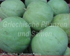 TINDA Baby-Kürbis Apfel-Kürbis aus Indien * 10 Samen SEHR SELTEN * Tolles Gemüse