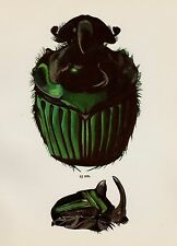 Vintage BEETLE Print DUNG Beetle Home Decor Gallery Wall Art Insect Print 1104