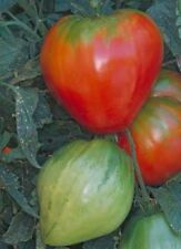 Red Strawberry Heirloom Tomato 25 Seeds Moon Gardens Simply Grown Beautifully