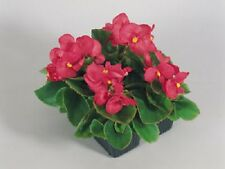 50 Pelleted Seeds Begonia Super Olympia Rose BUY FLOWER SEEDS