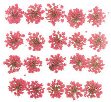 pressed flowers, pink lace flowers 20pieces for art craft card making
