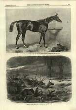 1866 Animals Flee Prairie Fire Lord Lyon Winner 2000 Guineas Stakes Newmarket