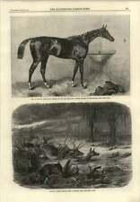 1866 Animals Flee Prairie Fire Lord Lyon Winner 2000 Guineas Stakes Newmarket