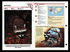 """RACCOON"" WILD LIFE FACT FILE ANIMAL INFORMATION CARD/HOME SCHOOL STUDY"